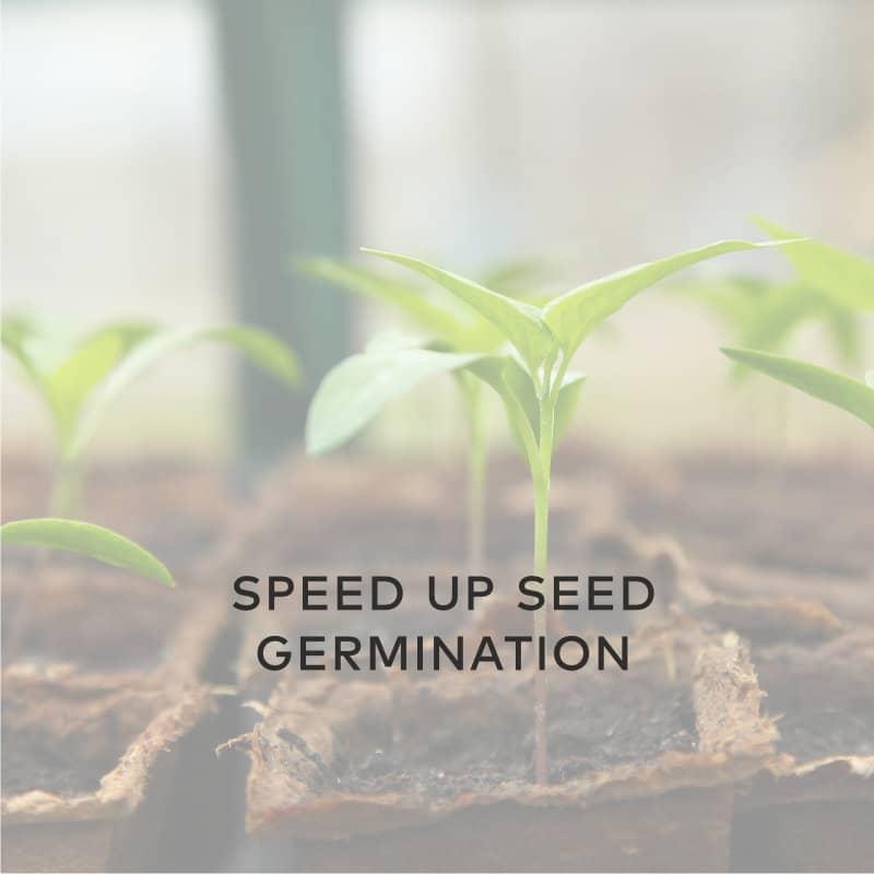 Speed Up Seed Germination