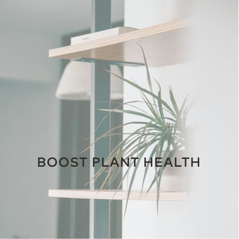 boost plant health hydrogen peroxide uses