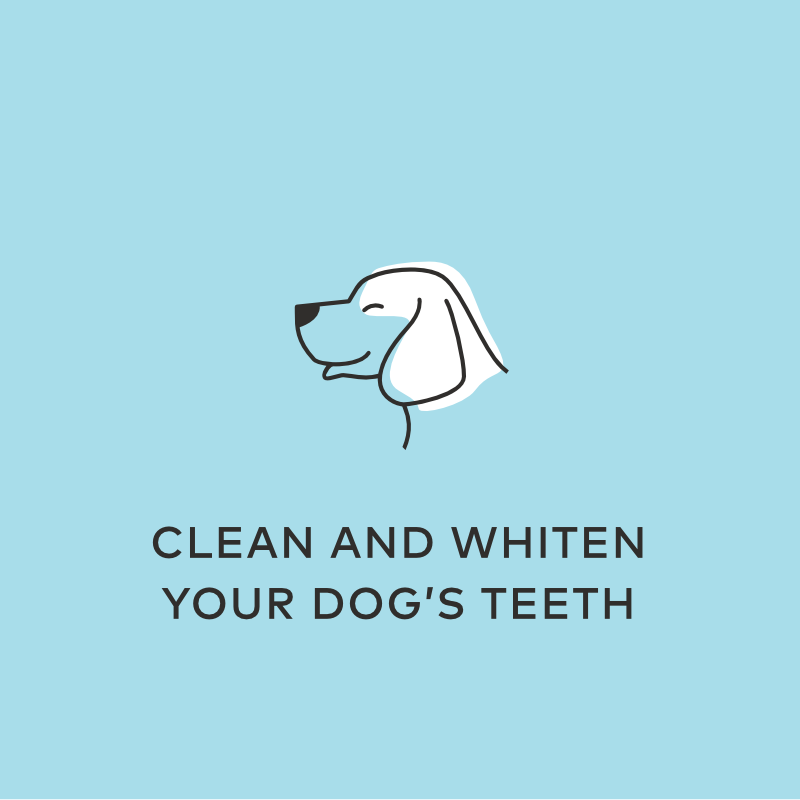 clean whiten dog teeth