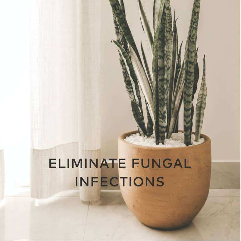 Eliminate Fungal Infections