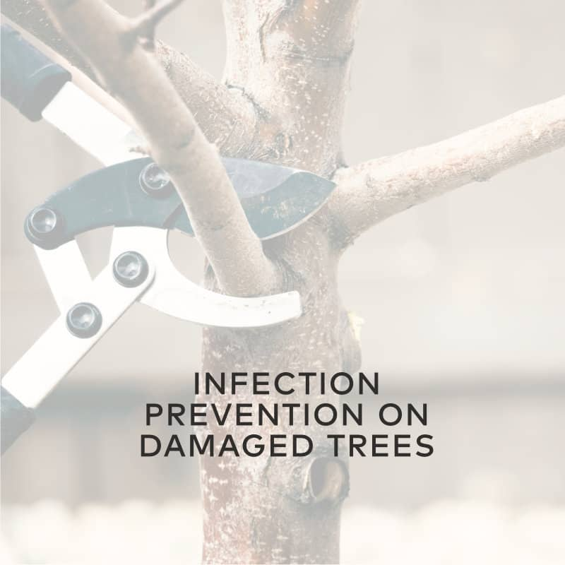 Infection Prevention On Damaged Trees