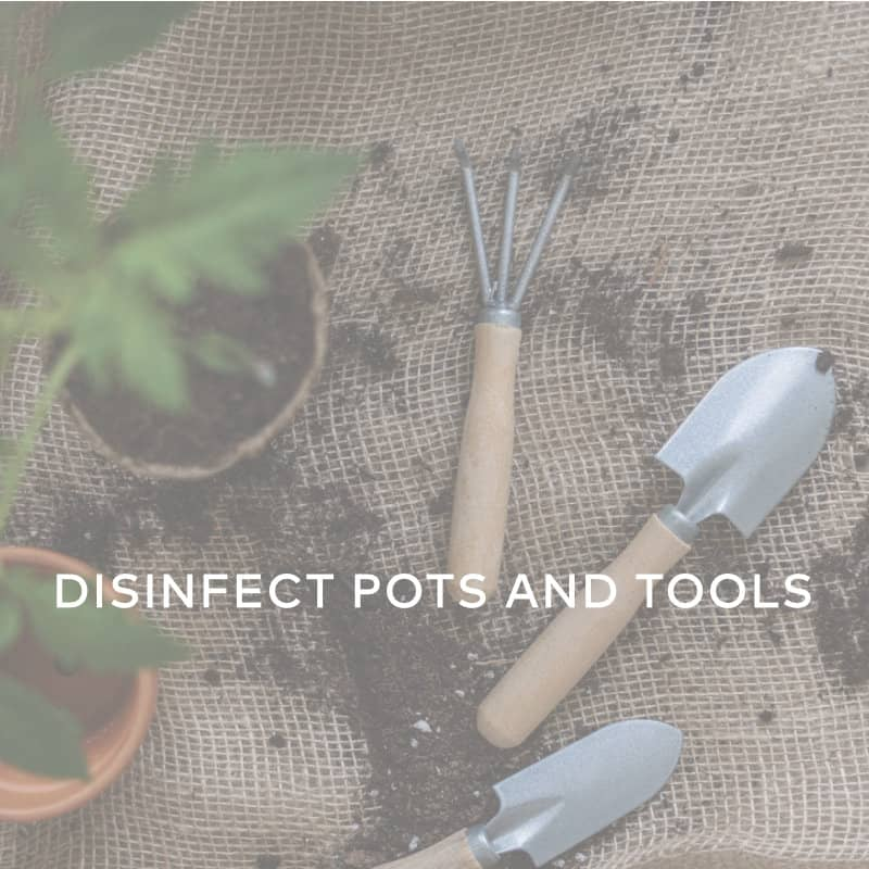 Disinfect Pots And Tools