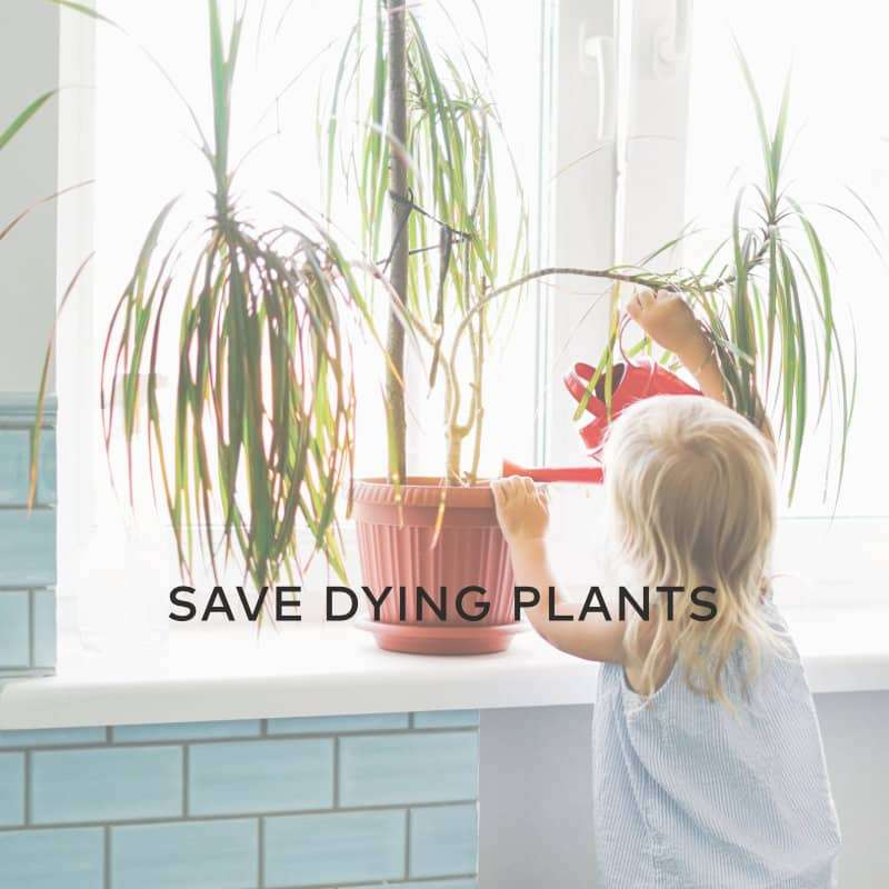 Save Dying Plants with Hydrogen Peroxide