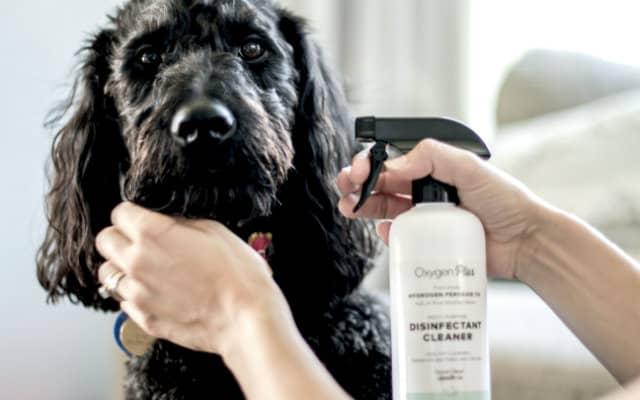 Pets Use Hydrogen Peroxide