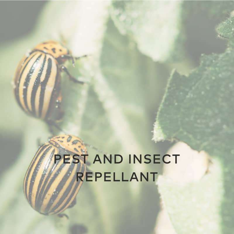 repellant pests insects hydropgen peroxide