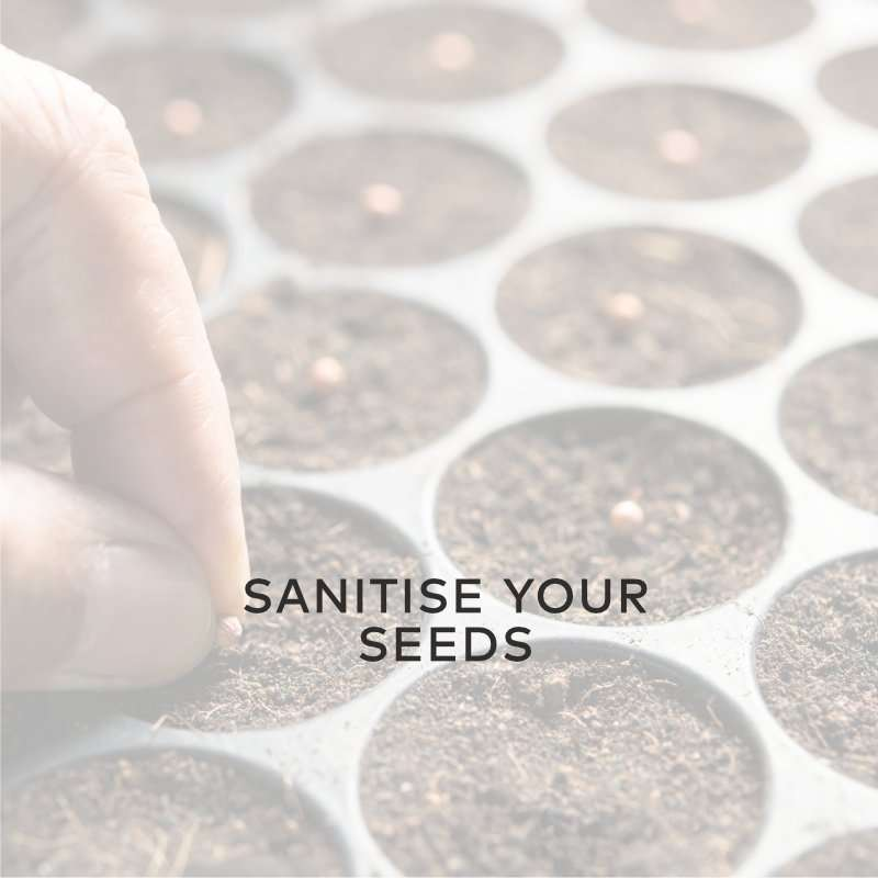 Sanitise Your Seeds